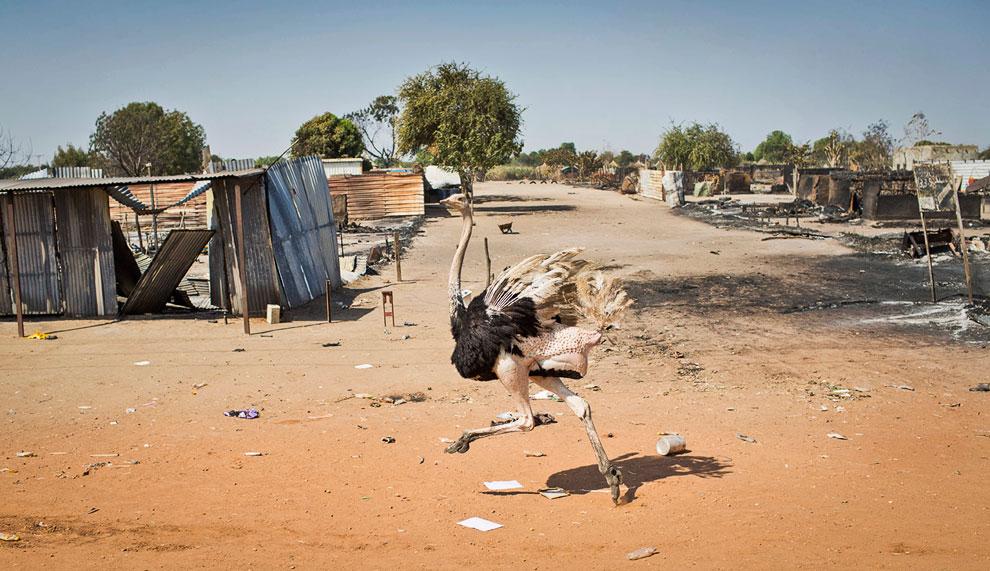 Чуть ли не единственный житель разрушенного города в штате Юнити. Здесь идут военные действия между повстанцами Южного Судана и правительственными войсками