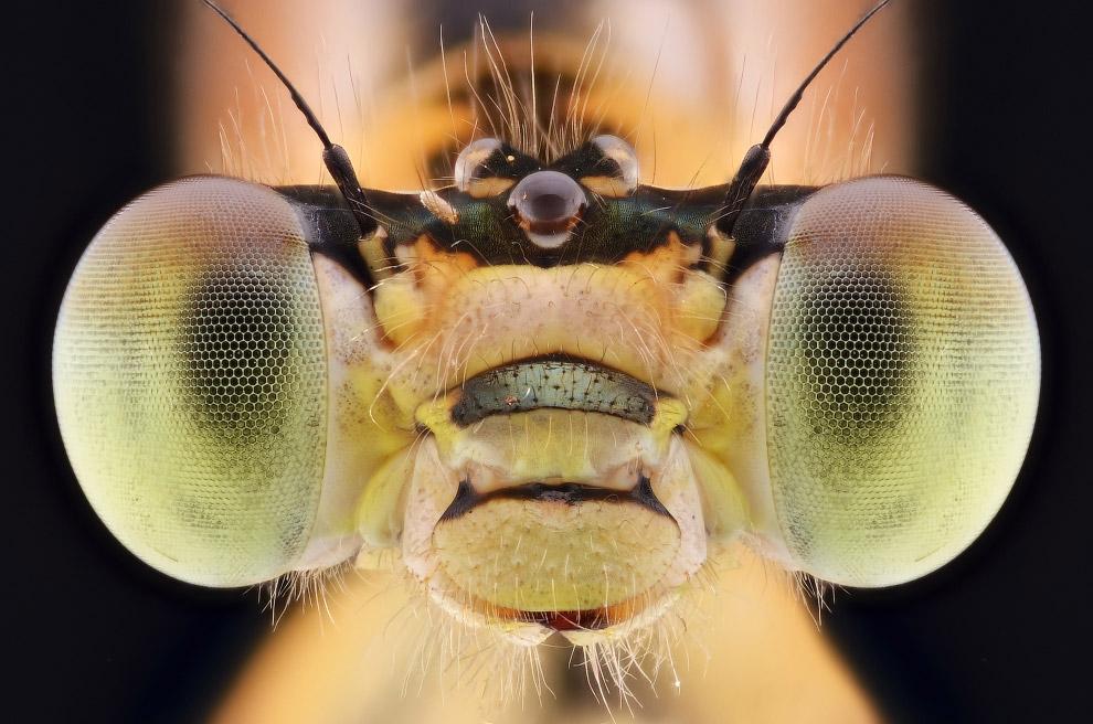bug06s