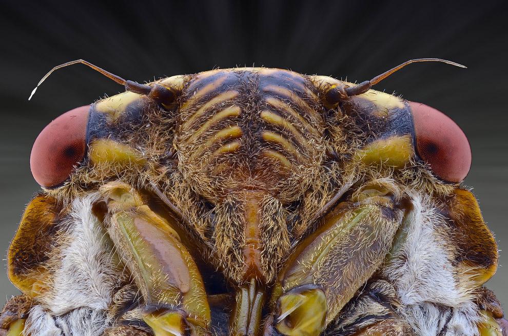 bug12s
