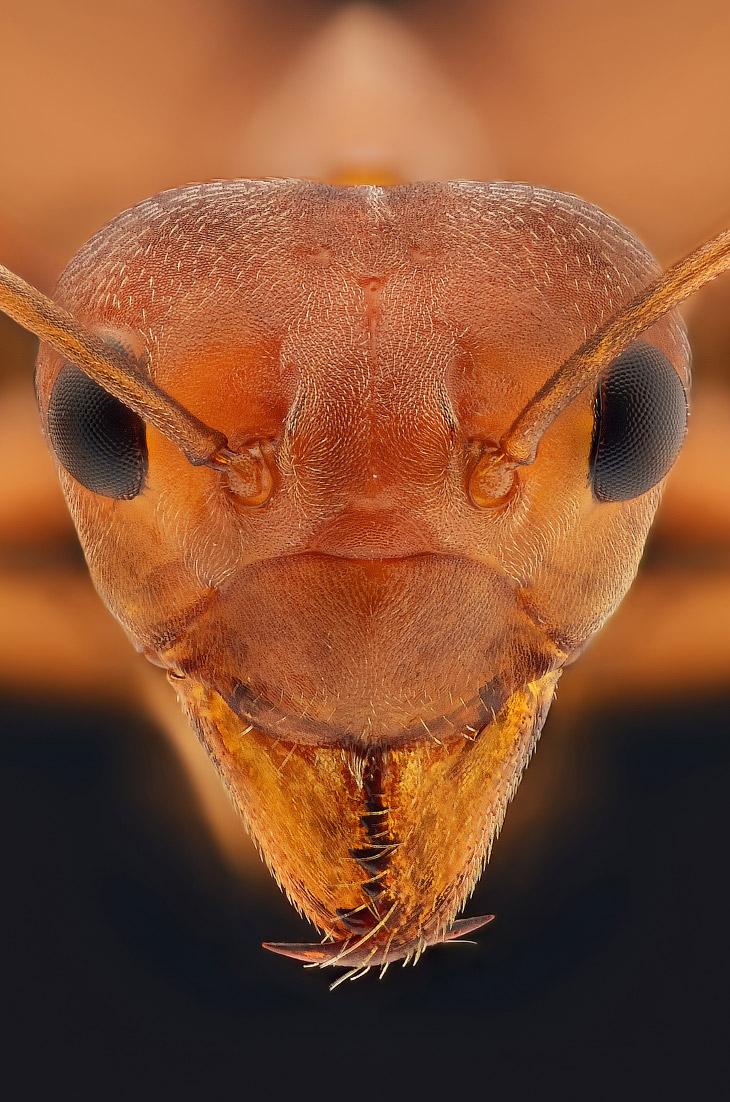 bug15s