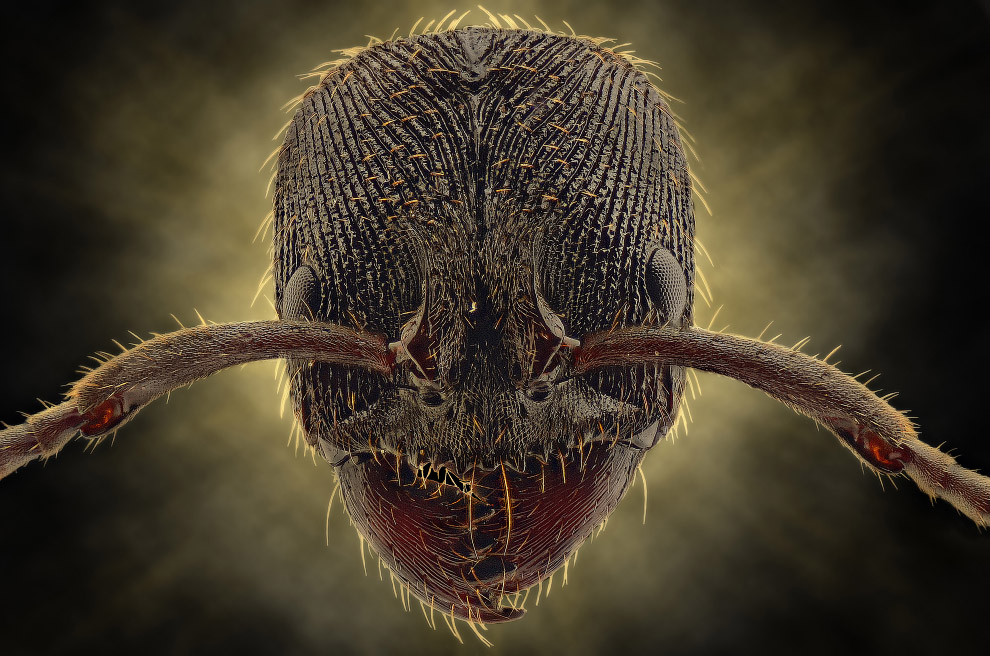 bug16s