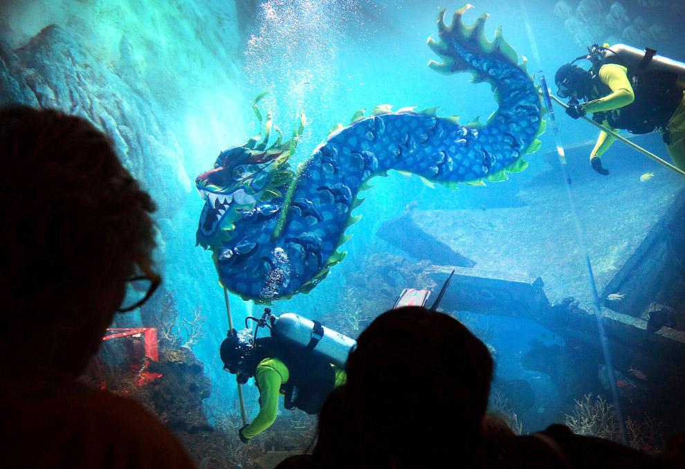 Драконы повсюду, даже в аквариумах с водой