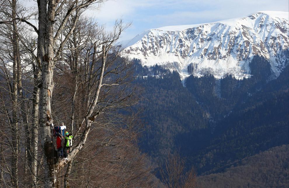 Тренеры забрались на дерево, чтобы наблюдать за выступлениями лыжниц на Красной Поляне