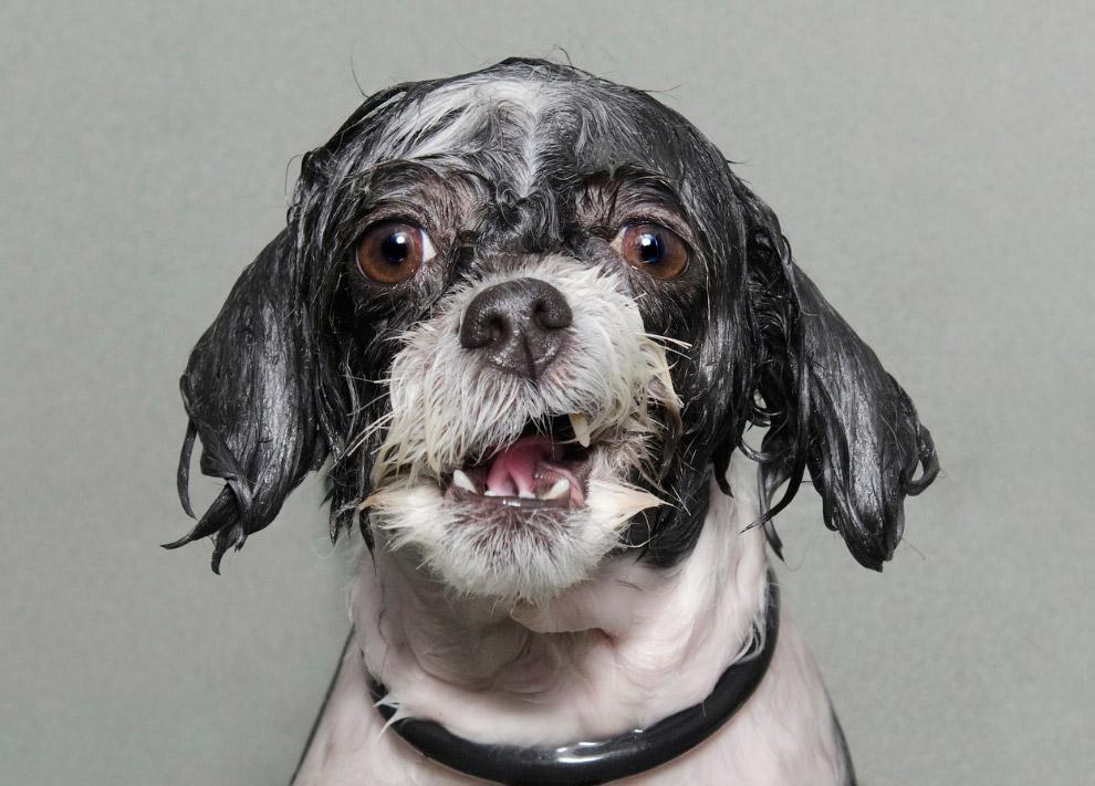 Пес во время принятия ванны