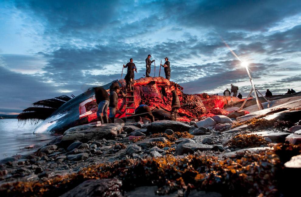 Охотники на гренландского кита