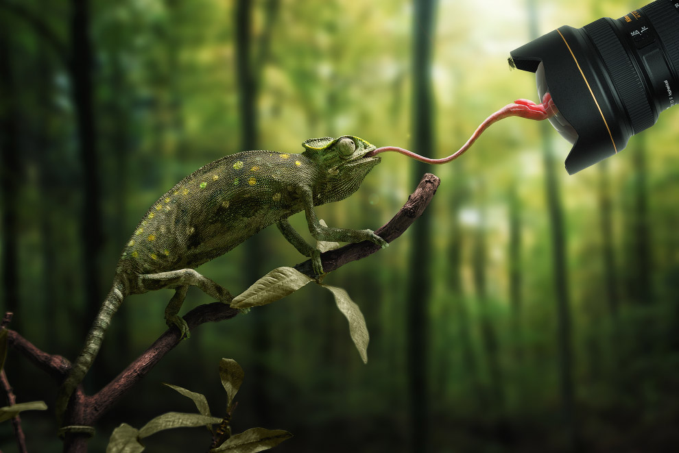 Животные обычно фотографируются в зоопарках, а дальше на помощь приходят фантазия, а также программы Lightoom и Phoptoshop