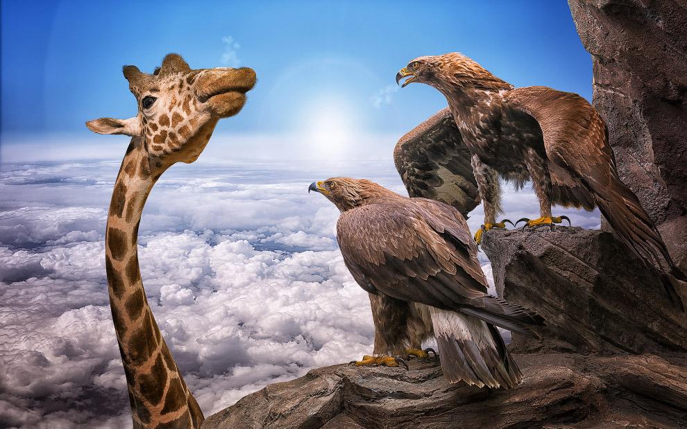 Жираф и орлы