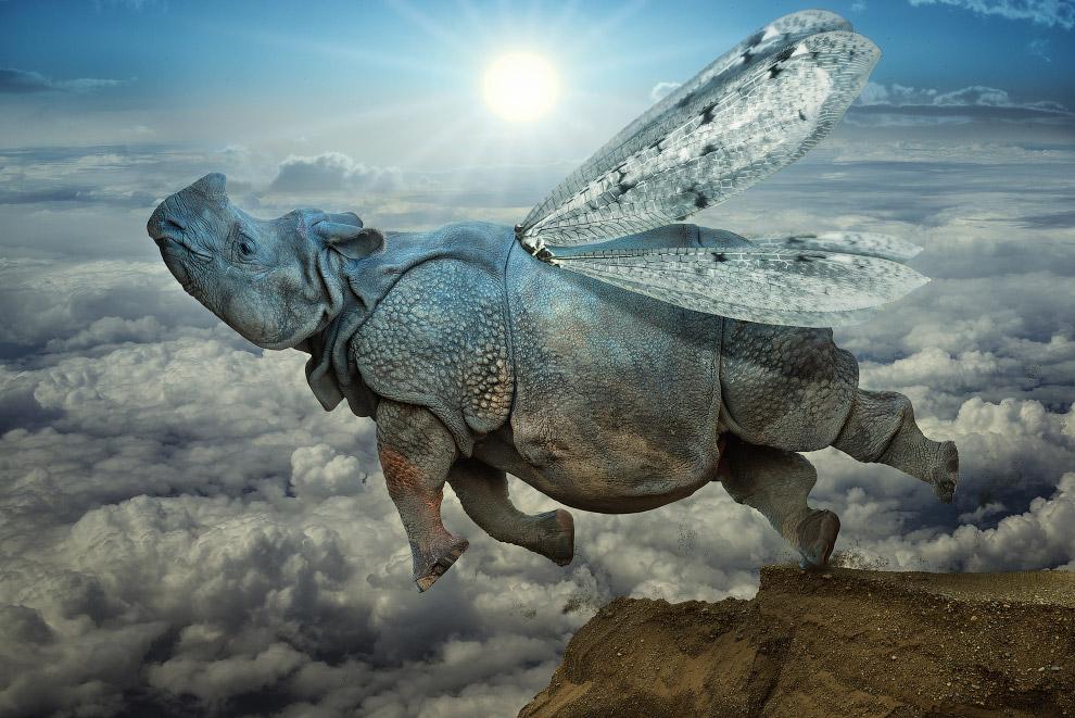 Летающий носорог