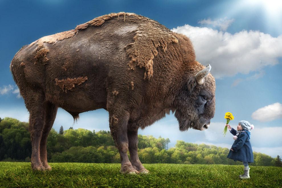 Девочка и буйвол