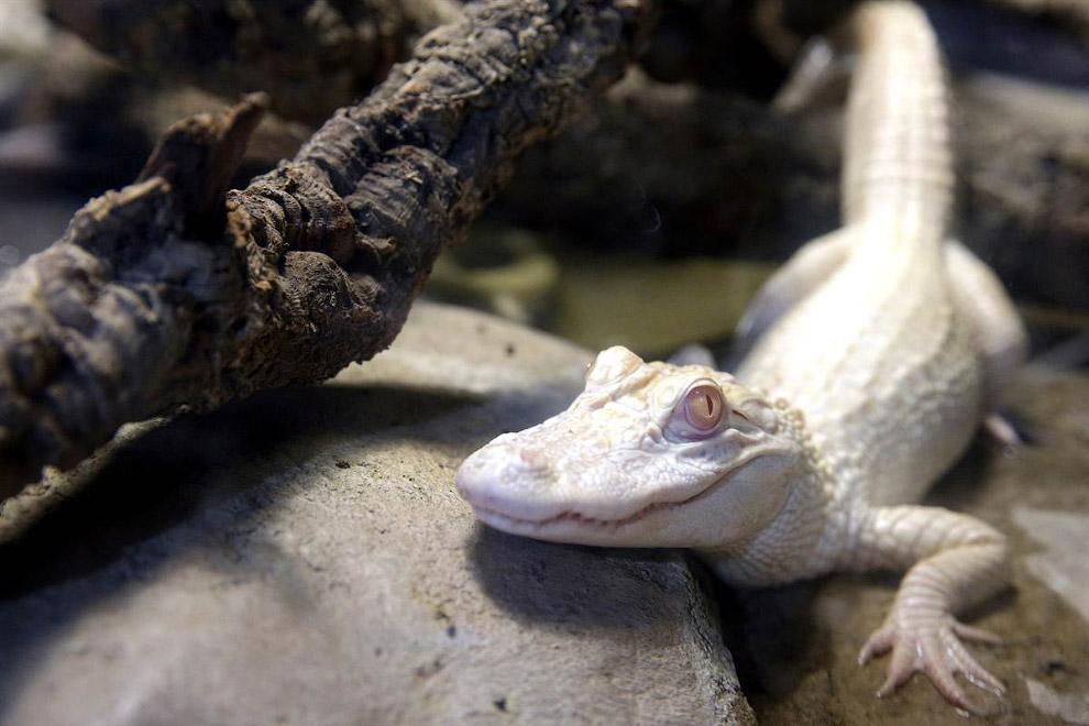 Трубкозуб дебютирует в зоопарке Детройта