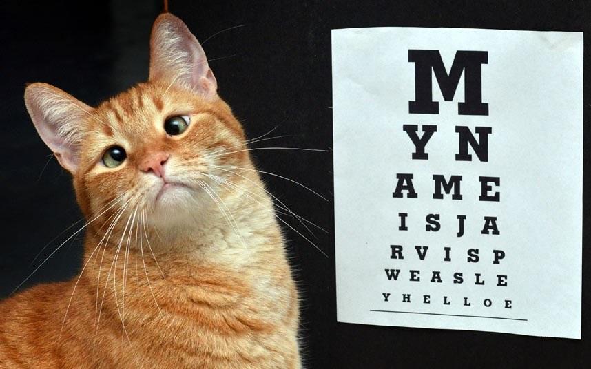 Косоглазый кот Джарвис