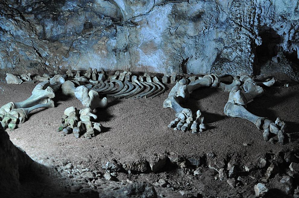 Кости мамонта в Мраморной пещере в Крыму