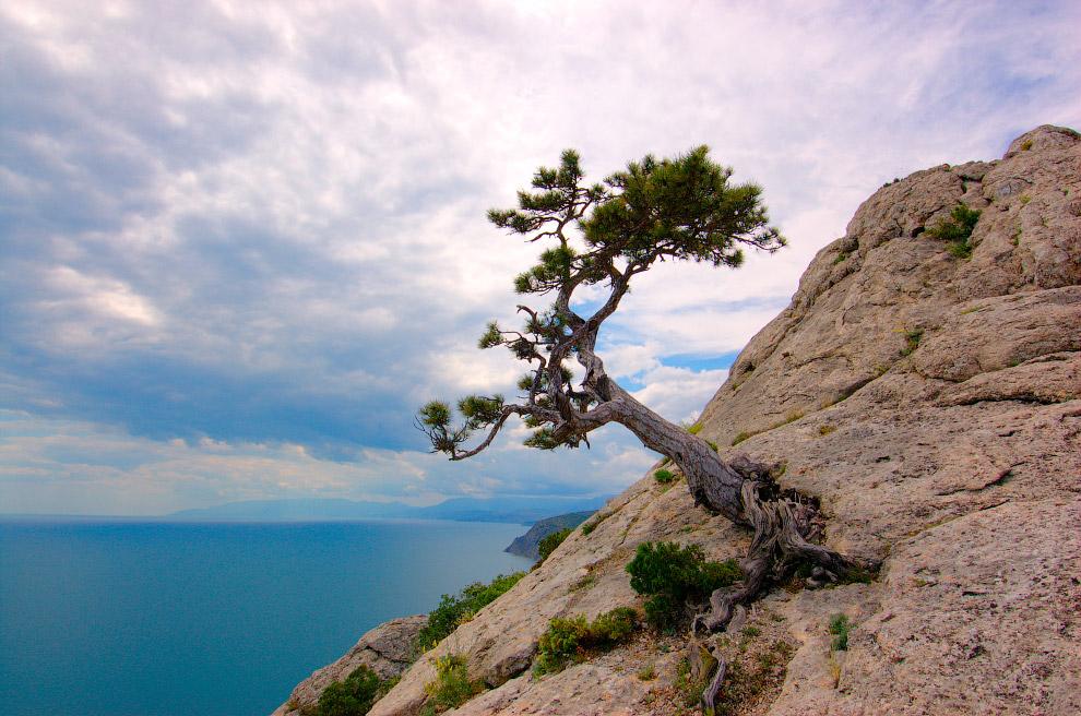 Черное море и дерево