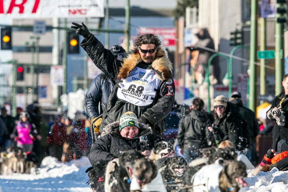 Собачьи упряжки отправляются в большое путешествие из центра города Анкоридж, штат Аляска