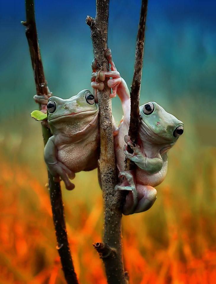 Две подружки-лягушки