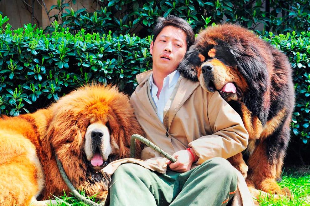 Хозяин с собаками на ярмарке животных в Ханчжоу, Китай