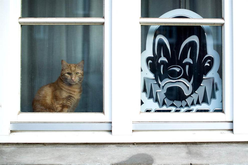 Грустный кот и силуэт грустного клоуна в окне. Гамбург, Германия