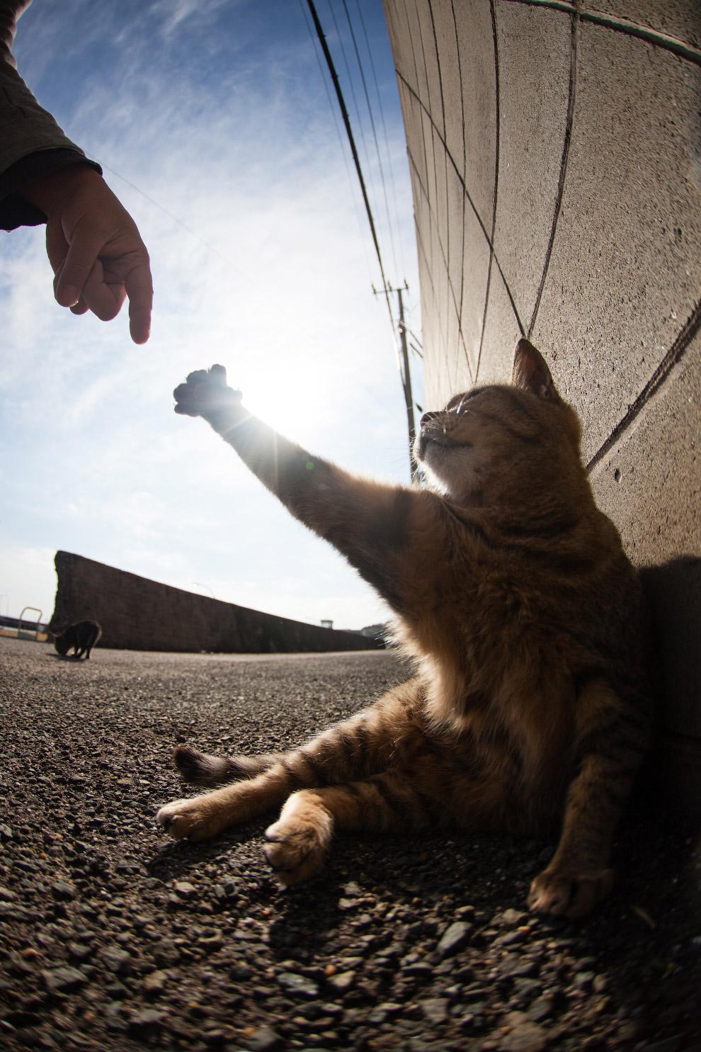 <p>Существует остров, на котором кошек больше, чем людей.</p>