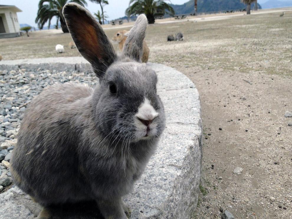 Тайны Острова кроликов в Японии