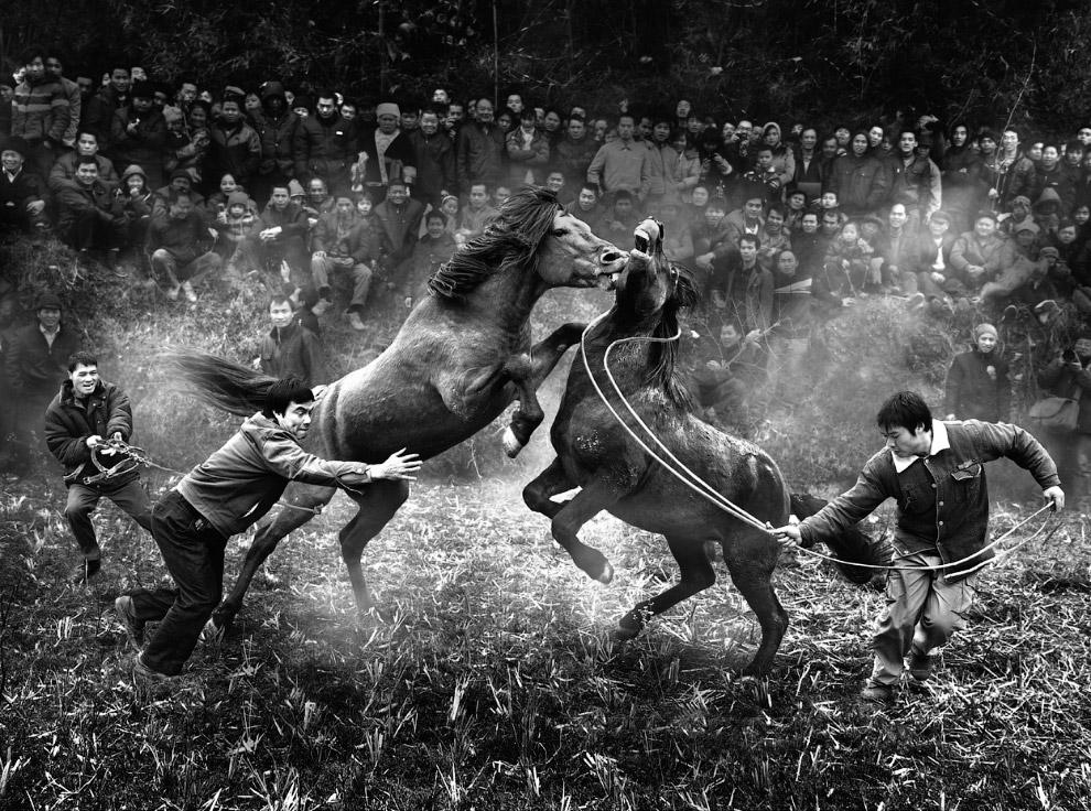 Борьба лошадей