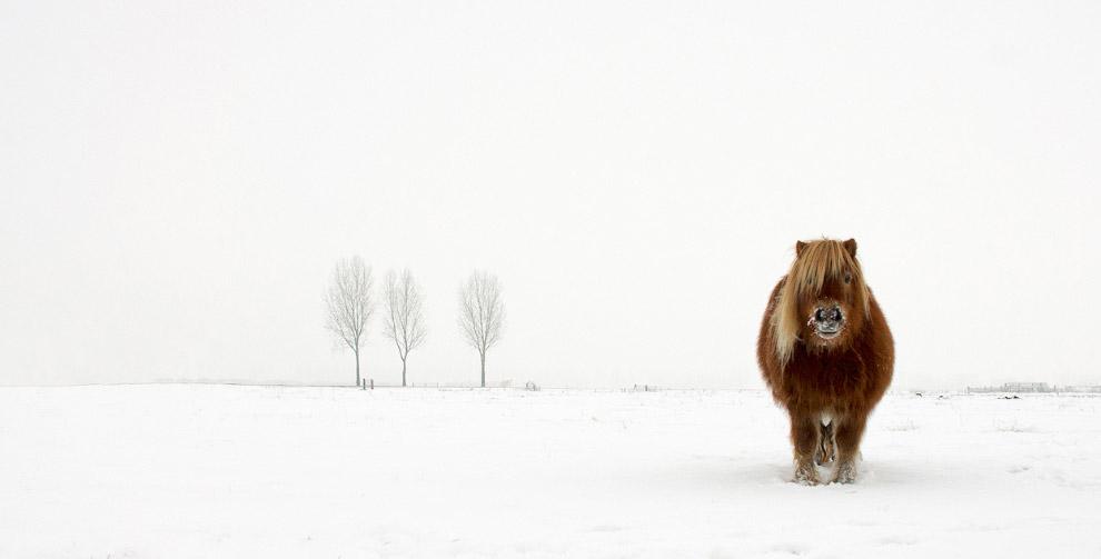 Пони в снегу