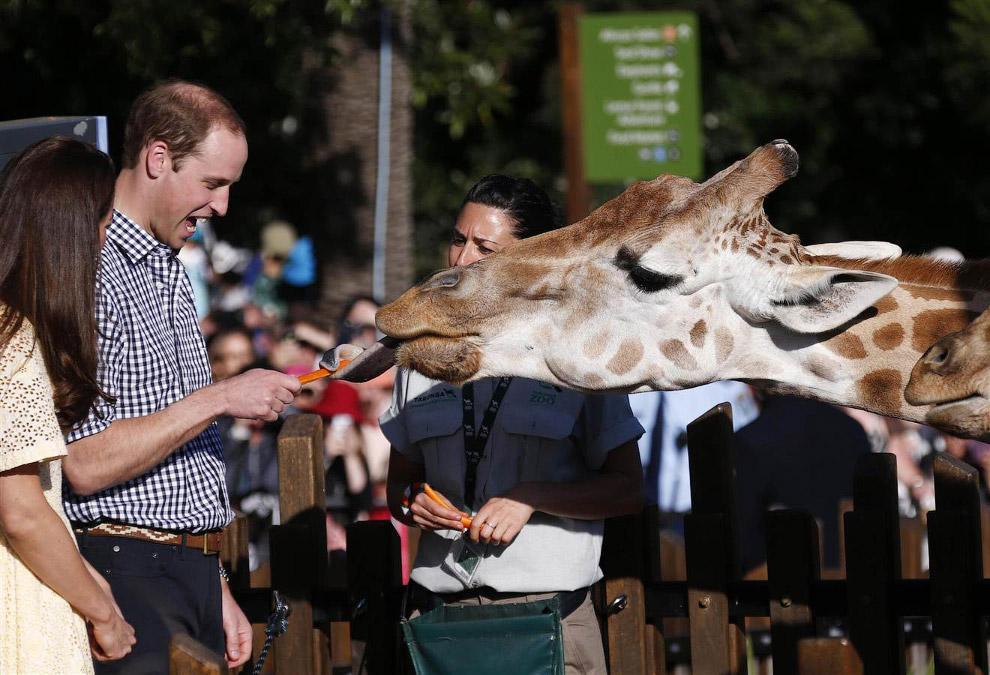 Королевская семья Кейт Миддлтон и принца Уильяма продолжают свое турне по Австралии