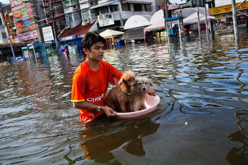 Наводнение в Бангкоке, Таиланд
