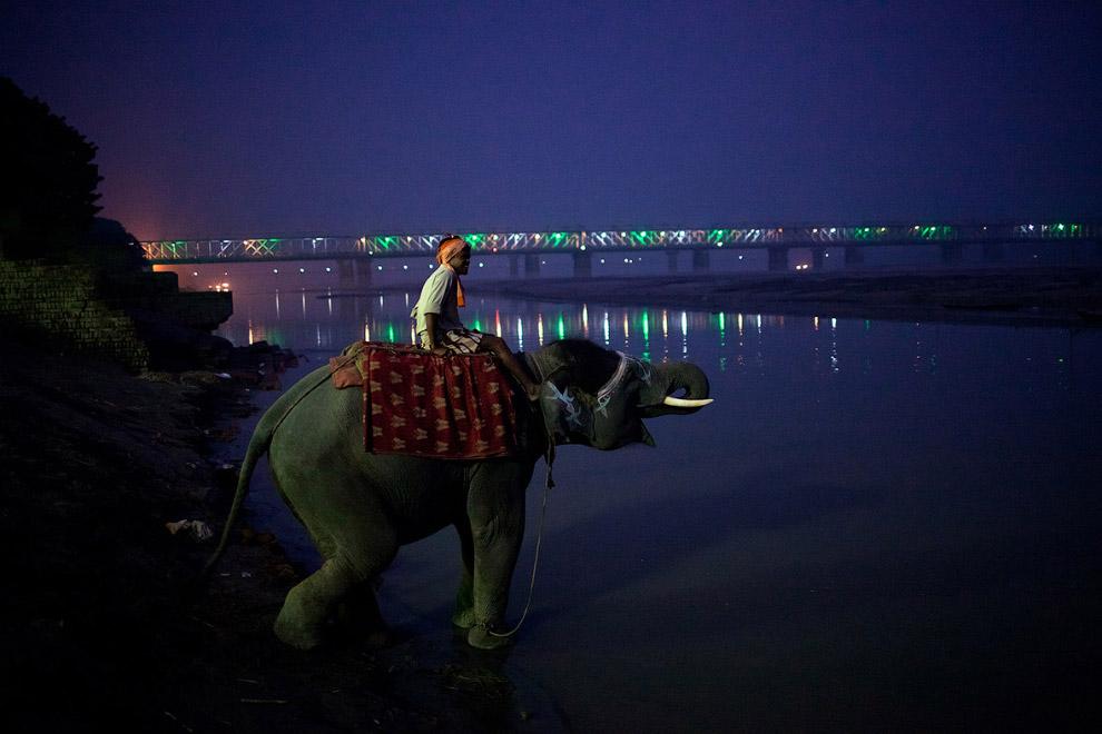 Погонщик сидит на слоне в реке Ганг