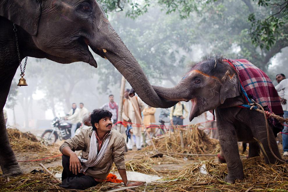 Ярмарка в индийском штате Бихар
