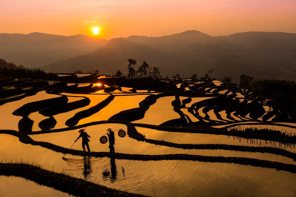 Рисовые террасы в Китае на закате