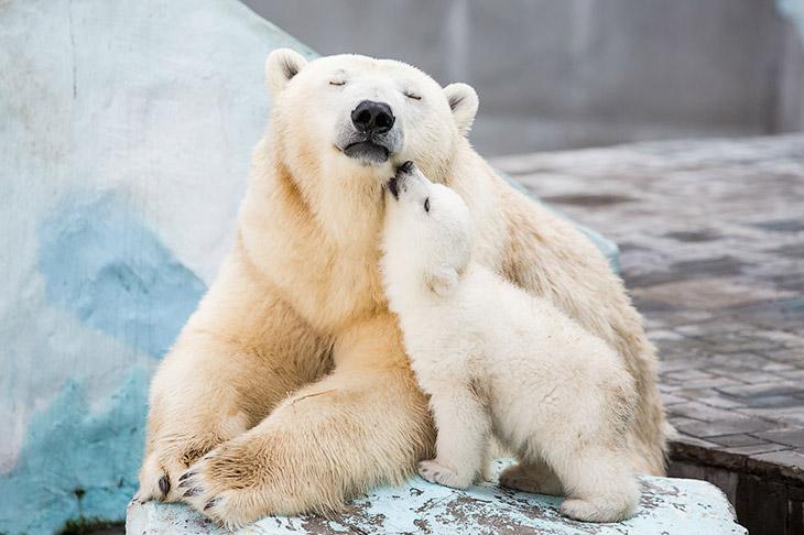 Весенние хлопоты в зоопарке