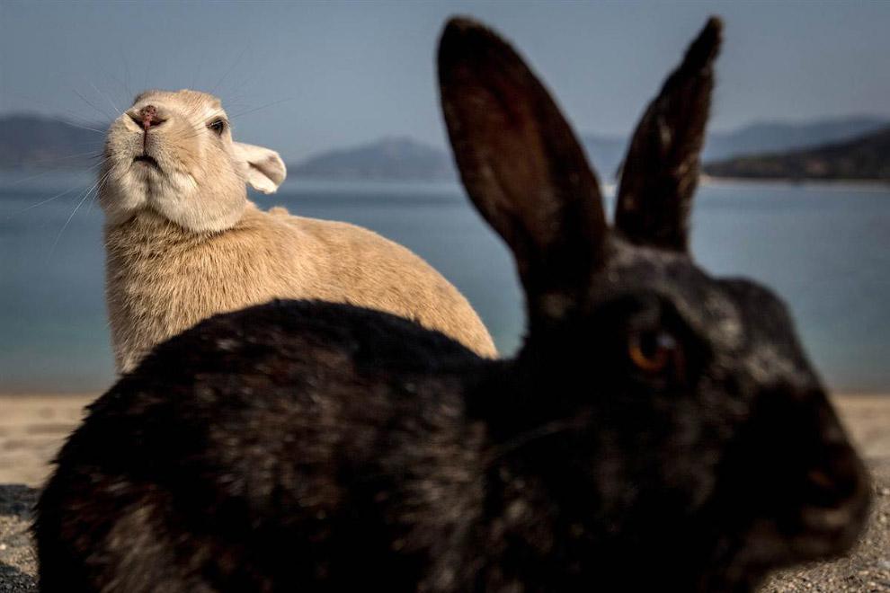 Кролики с острова кроликов
