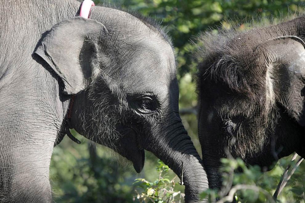 Слонята в специальном слоновьем центре в Индонезии