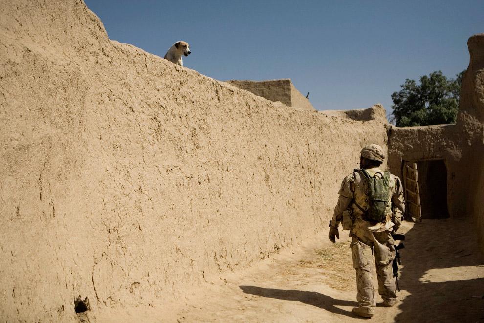 Собака и канадский солдат к юго-западу от Кандагара
