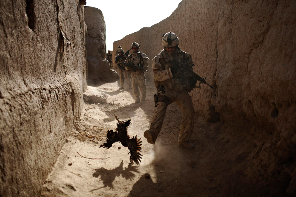 Канадский солдаты бегают за курицей