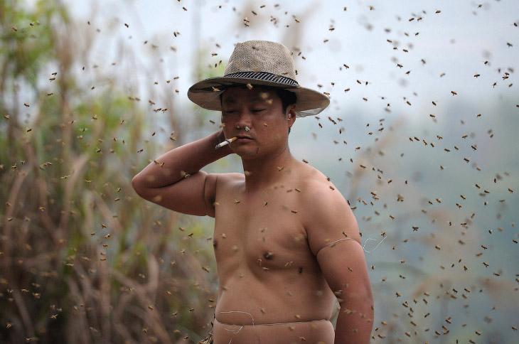 И вот он новый претендент на мировой рекорд — пчеловод из Чунцина Ши Пин