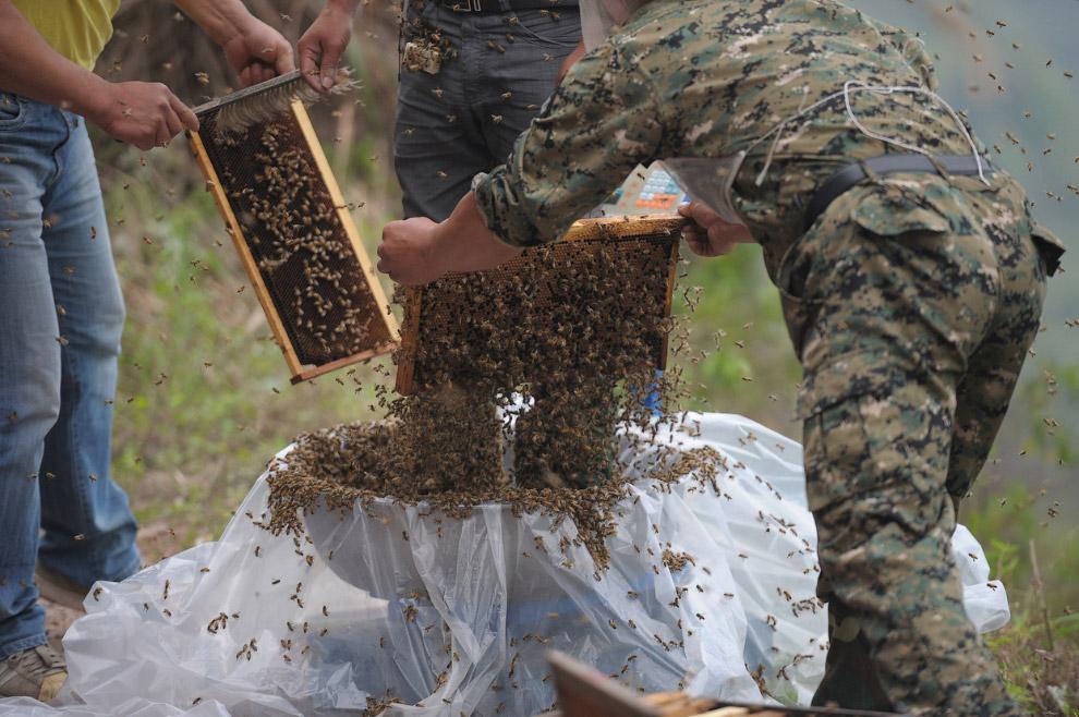 «Живой костюм» из пчел