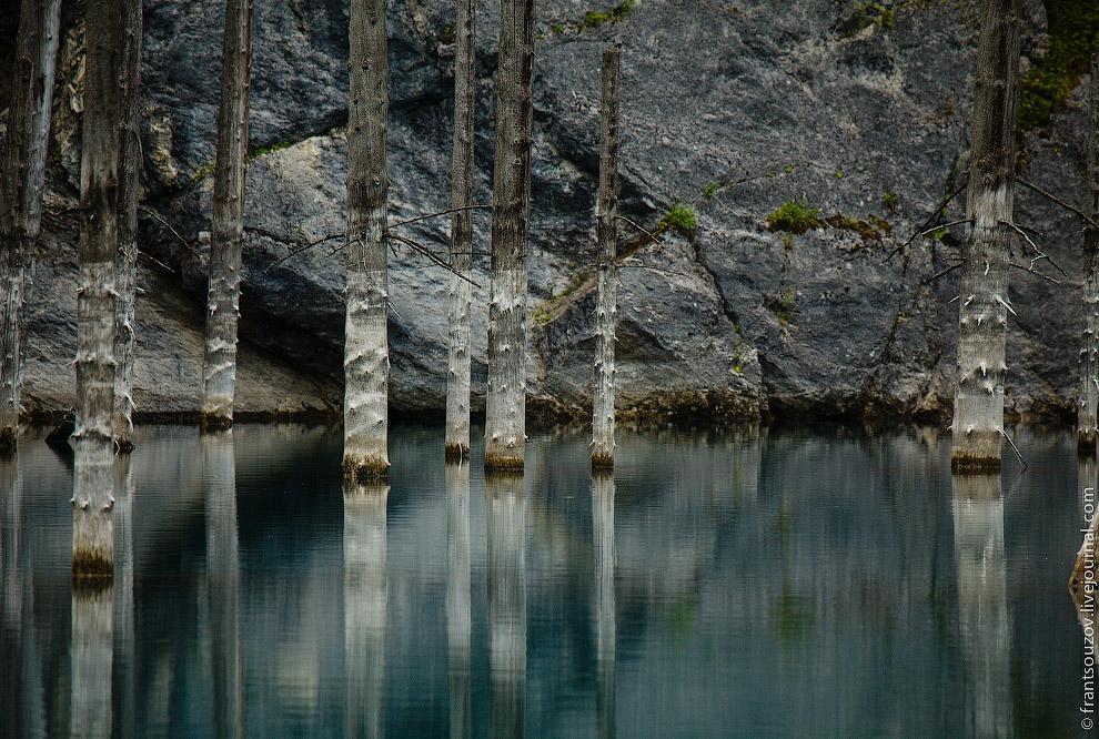 Озеро Каинды: утонувший лес
