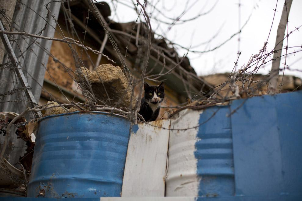 «Буферный» кот в буферной зоной ООН на Кипре