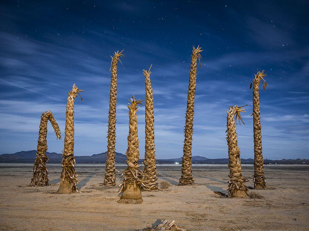 Пустынные пальмы