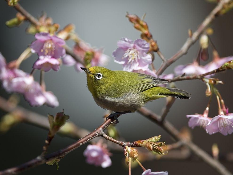 Птица в парке Токио