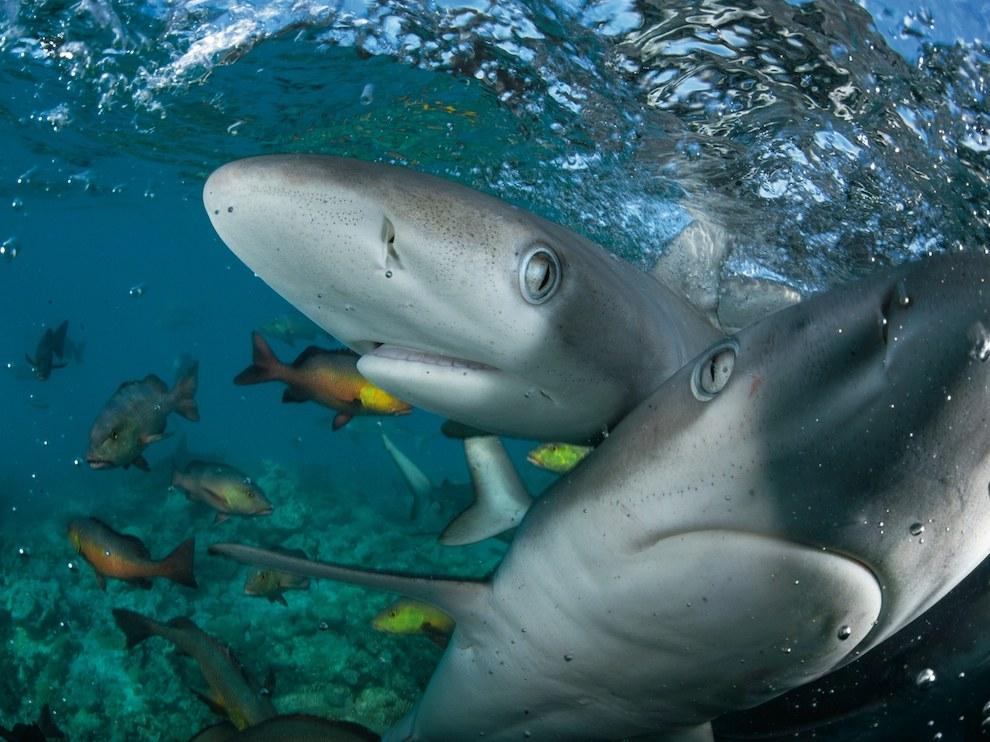 Галапагосские акулы, Мозамбикский пролив