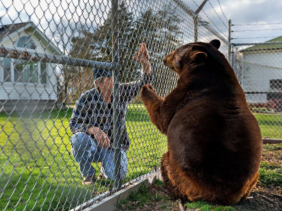Медведица Бу-Бу, США