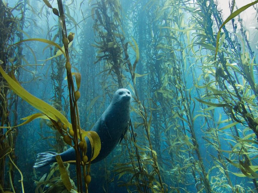 Тюлень, США
