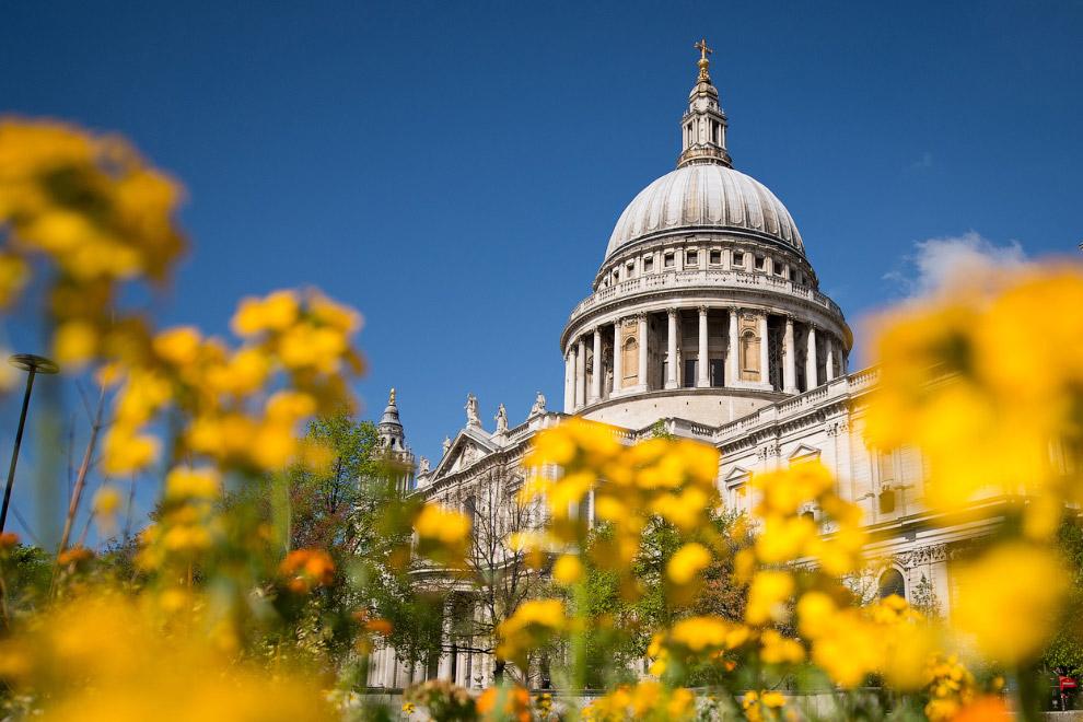 Цветы на фоне собора Святого Павла в Лондоне