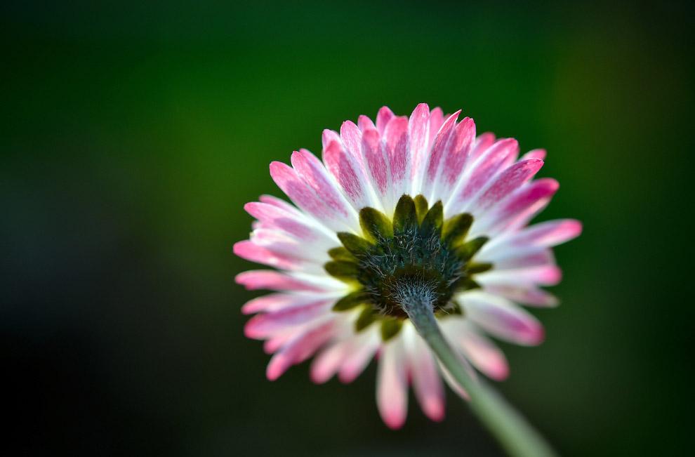 Просто цветок крупным планом