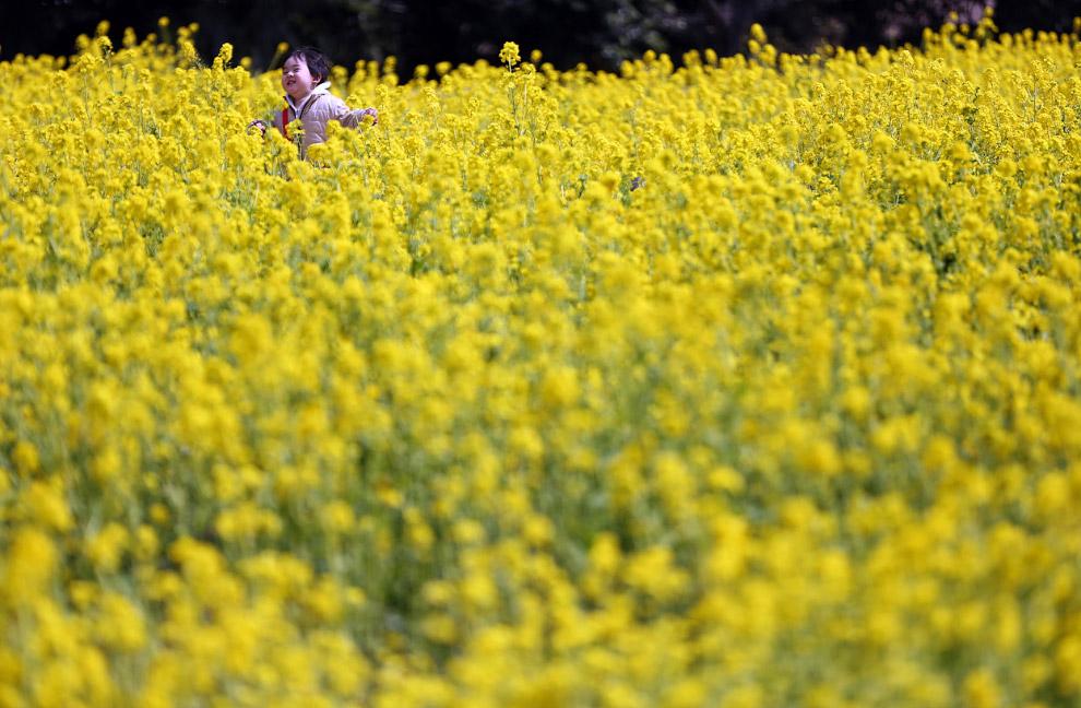 Рапсовое поле в Токио