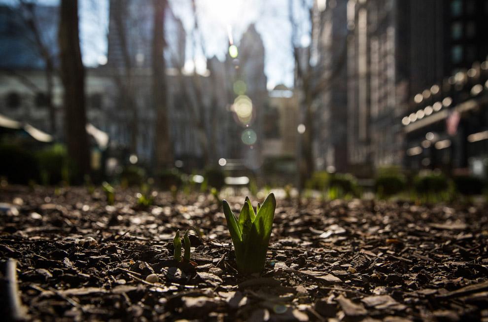 Вылезающий на волю цветок в Брайант-парке в Нью-Йорке