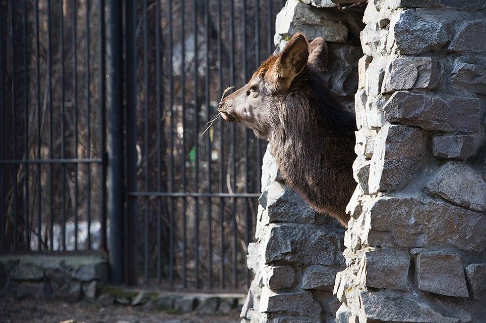 Аргентинский зоопарк Лухан
