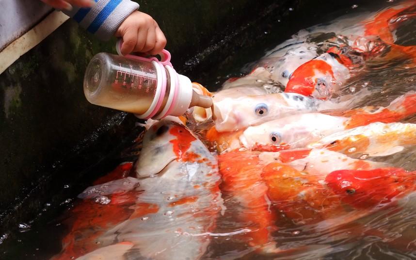 Рыб кормят из бутылочки для младенцев